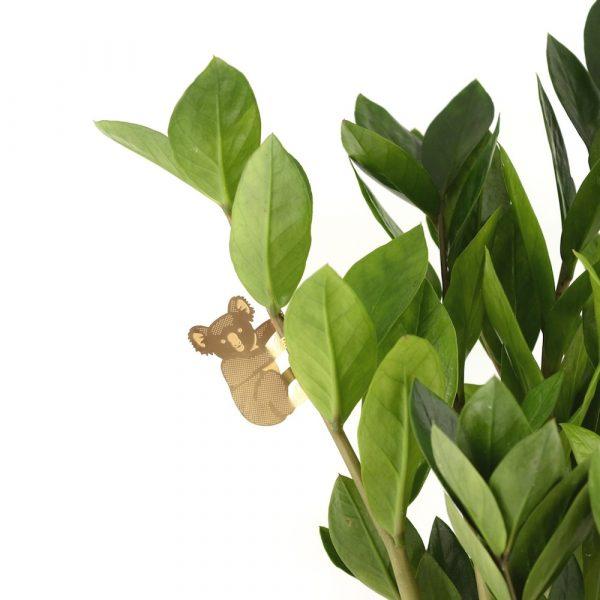 another-studio-plant-animal-koala-pflanzendeko