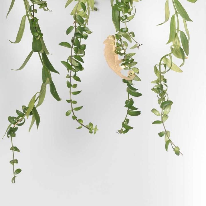 Another Studio - PLANT ANIMAL – Chameleon-3783