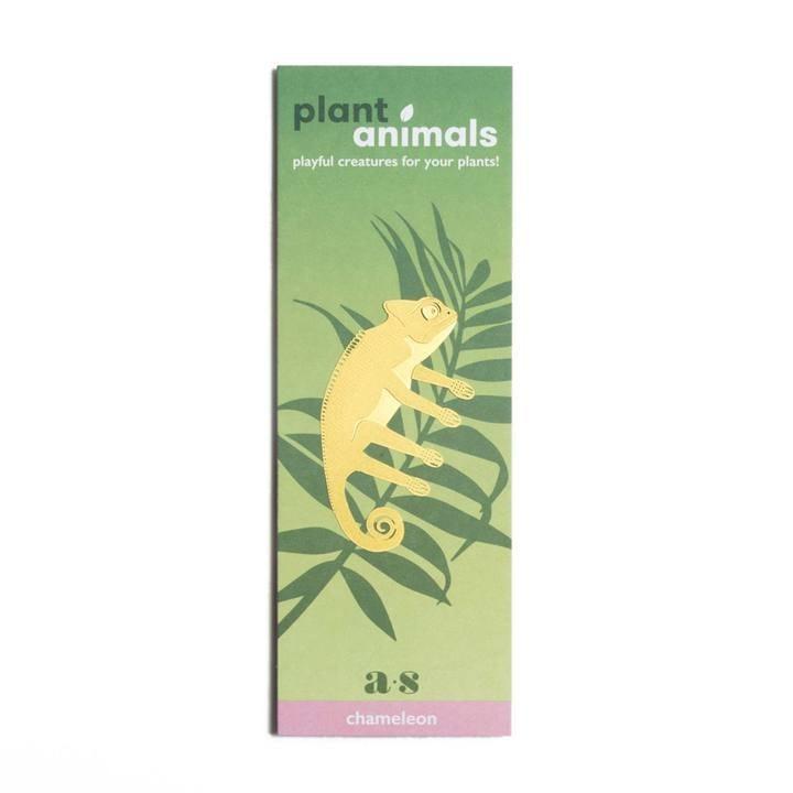 Another Studio - PLANT ANIMAL – Chameleon-3782