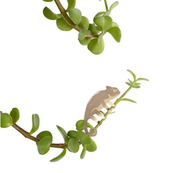 Another Studio - PLANT ANIMAL – Chameleon-0