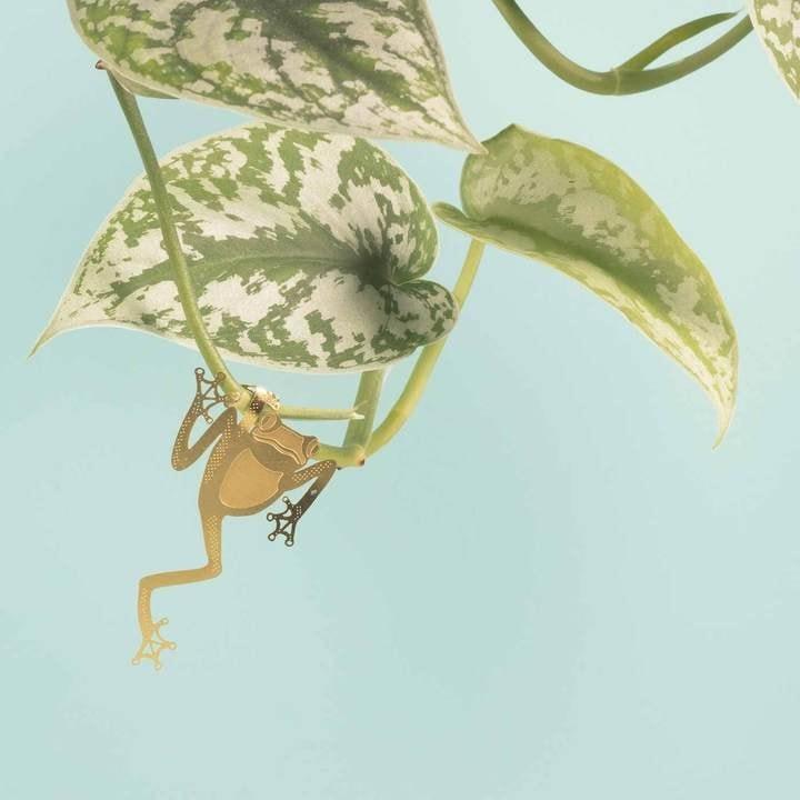 Another Studio - PLANT ANIMAL – Laubfrosch-3781