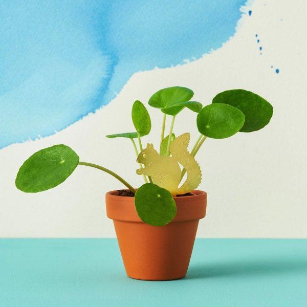 another-studio-plant-animal-eichhoernchen-pflanzendeko